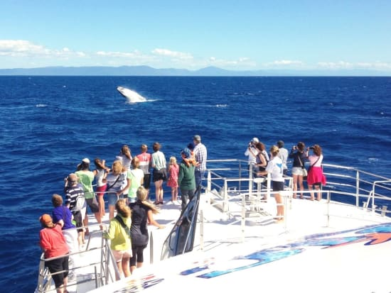 People_on_boat_whale_in_front_0702