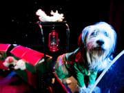 Las Vegas_Popovich Comedy Pet Theater_Dog Train