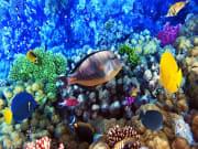 Reef-scene