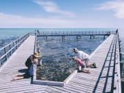 Stromatolites in Hamelin Bay