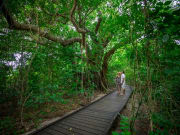 rainforest_walk