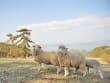 Yangmori Farm