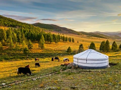 憧れのゲルに泊まる!モンゴル宿泊ツアー