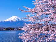 Japan_Yamanashi_Lake Kawaguchiko_Mt Fuji_cherry blossoms_shutterstock_1015303807