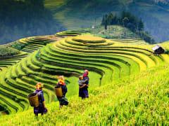 Rice fields in Sapa town