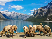 Canada_Alberta_Banff_Lake-Minnewanka_shutterstock_591767243