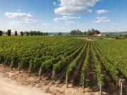 Saint-Émilion Vineyards