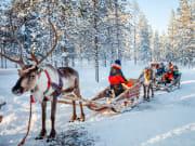 Finland_Lapland_Reindeer_Winter_Forest_shutterstock_519062437