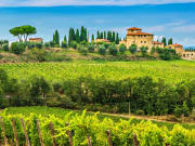 vineyard, Chianti region,Tuscany,Italy,Europe