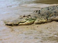 Jumping Crocodiles Cruise Adelaide River