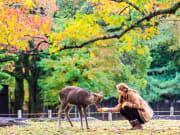 Japan_Nara_deer_shutterstock_219813889