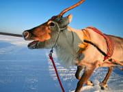 Northern Lights tour from Rovaniem