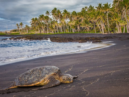 US_Hawaii_Big Island_Black Sand Beach__shutterstock_272443031
