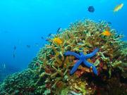 Palau_snorkeling_123RF_83017423