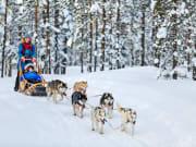 Finland_Lapland_Husky_shutterstock_485464570