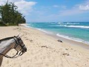 USA_Hawaii_North-Shore-Oahu_Horseback-Ride