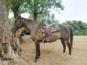 USA_Hawaii_Oahu_Horseback-Ride