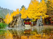 Nami Island in Autumn golden trees and clean pond