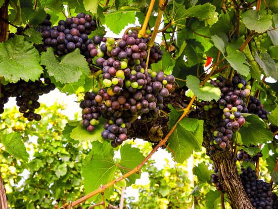 kumeu wine tasting