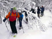 Norway Tromso Snowshoe Tour