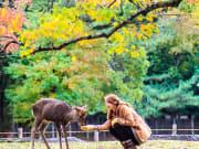 Japan_Nara_deer_shutterstock_219813889 1