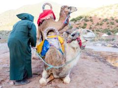 アトラス山脈を望む ラクダ乗り体験ツアー<英語ガイド/昼食付/マラケシュ発> | モロッコの観光・オプショナルツアー専門 VELTRA(ベルトラ)