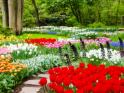 Netherlands_Holland_Keukenhof