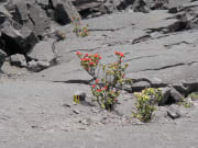 USA_Hawaii_Volcanoes-National-Park_643852846