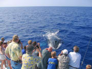 Picture Perfect on Hawaii's Best Whale Watch  Cruises