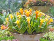 Orchid Farm, Pattaya