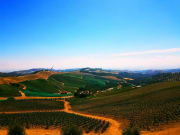 California_Toast Tours_Hearst Castle_Wineries View