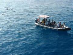 makai-near-dolphins
