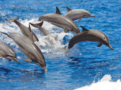 1_dolphins-7-jumping (1)
