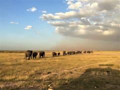 Amboseli6
