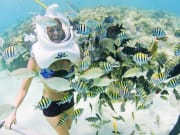 Mexico_Underwater_Fishes_Xcaret_Mexitours