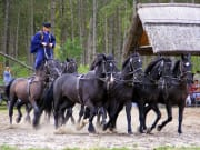 Traditional Horse show in Puszta