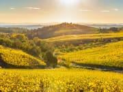 Italy Tuscany Chianti Vineyards