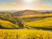 Italy_Chianti_Tuscany_vineyards