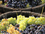 France, Bordeaux Winery, Vineyard Grape Harvest
