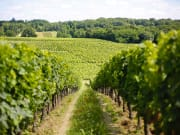 France_Bordeaux_Vineyards_Rolling_Hill_Winery