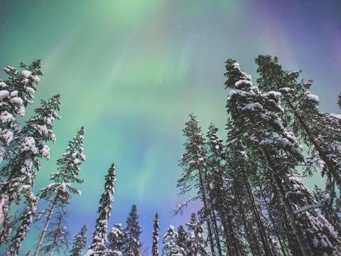オーロラ (ロヴァニエミ発 日帰りツアー) | フィンランドの観光・オプショナルツアー専門 VELTRA(ベルトラ)
