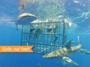 sharkcage