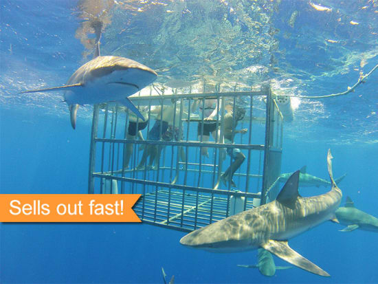 North Shore Shark Adventures - Famous Shark Cage Diving
