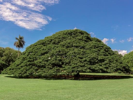 waii_Oahu_Moanalua Gardens_shutterstock_389661181