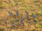 SerengetiBalloonSafaris-37-2