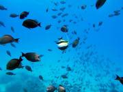 OCEAN JOY CRUISES - 7077490