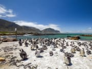Africa_SouthAfrica_Stonypoint_shutterstock_1008024409