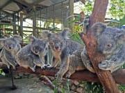 Rainforestation Koala & Wildlife Park