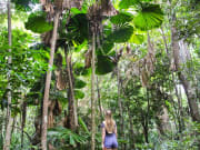 Guided Rainforest Boardwalk Tour