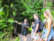 Guided Rainforest Boardwalk Tour